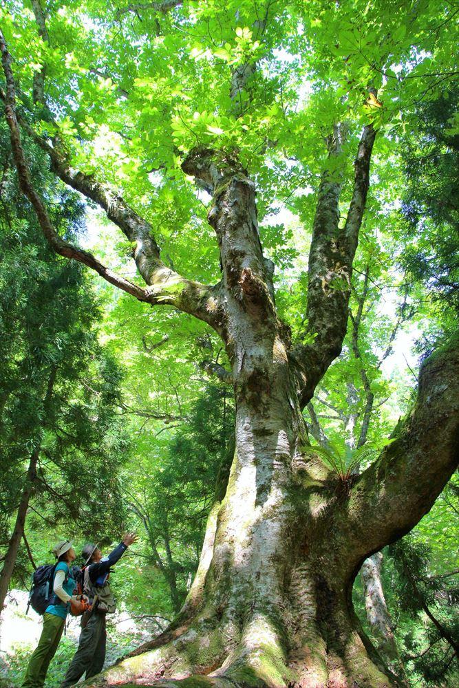 日本エコツーリズム協会、12月に設立20年記念フォーラム開催