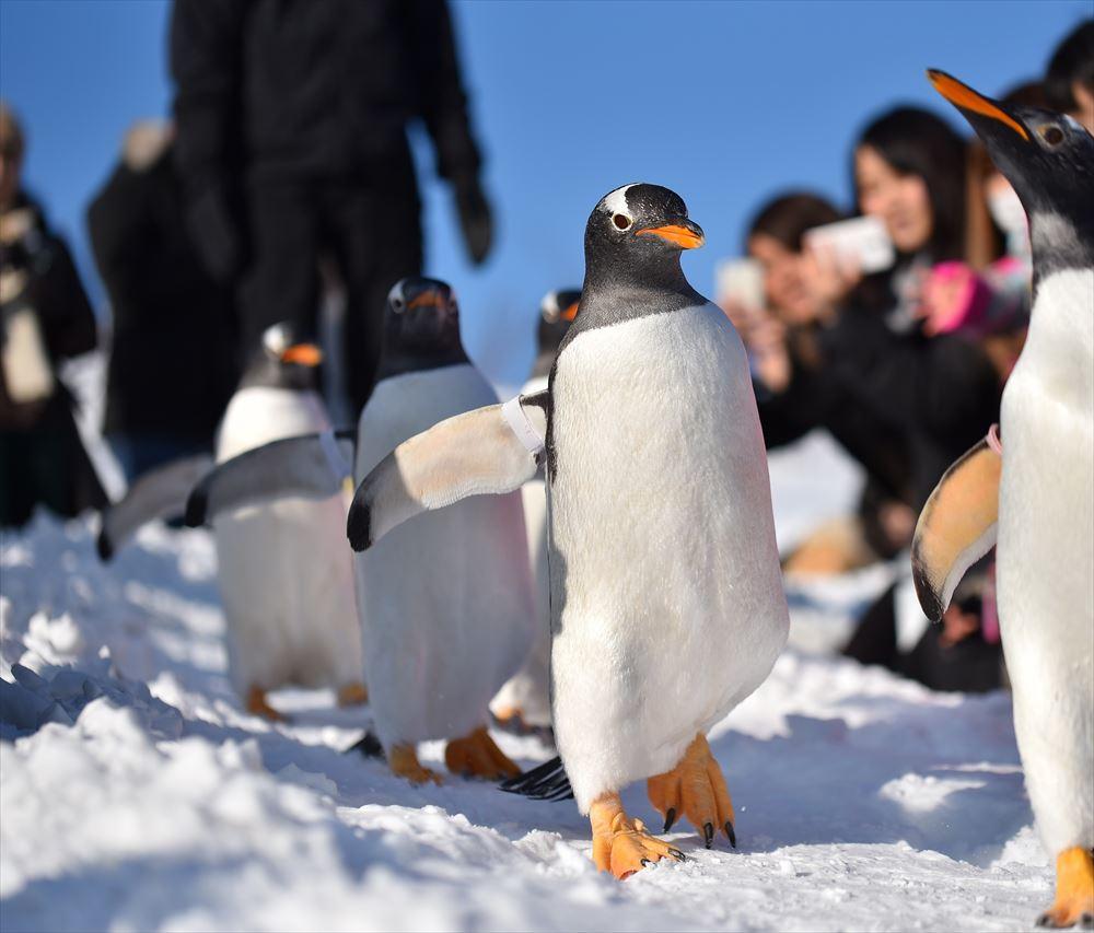 おたる水族館が旅行業参入、道外客の集客増へ10月から着地型商品