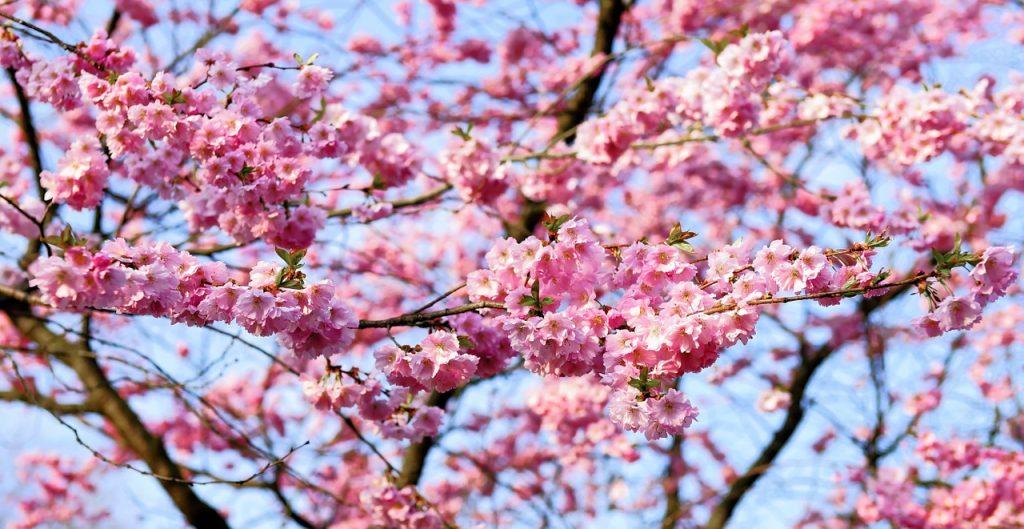 たとえ見る人がいなくても花は咲く