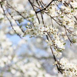 置かれた場所で花咲かじ
