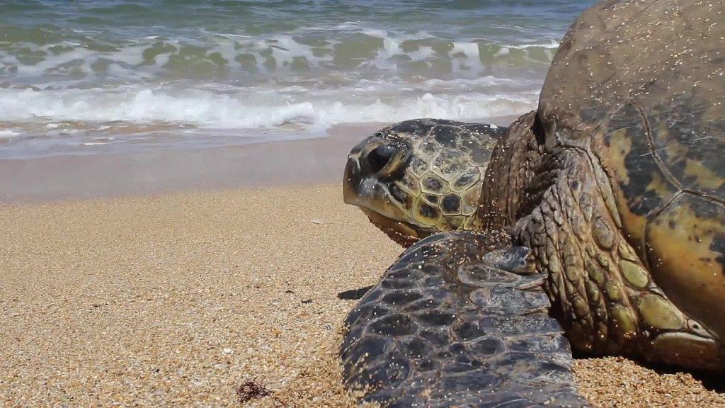ハワイ州観光局、島ごとにSDGs旅行開発 日本人受け入れ準備も着々