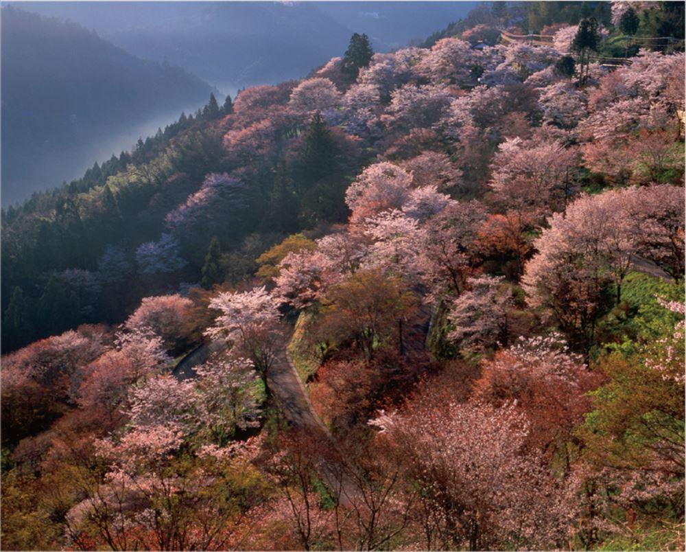 高級ホテル誘致、熊野が開発候補地 観光庁のマッチング事業 訪日富裕層受け入れへ